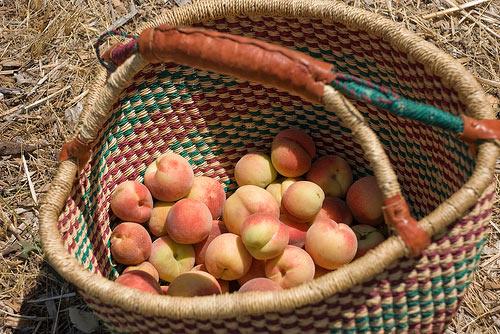 Pick a Peck of Perishable Peaches