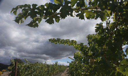 Better Winemaking Through Chemistry