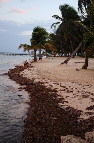 Discovering Garifuna Music