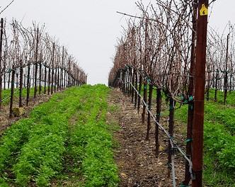 The Farm Report: Winter 2010 Edition
