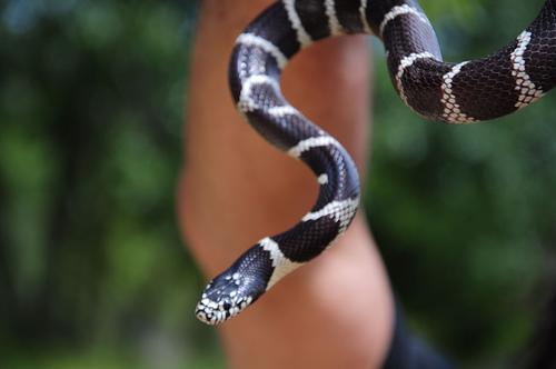 Snakes Alive!