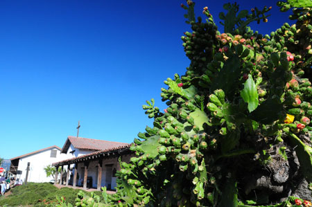 cactus and sonoma mission