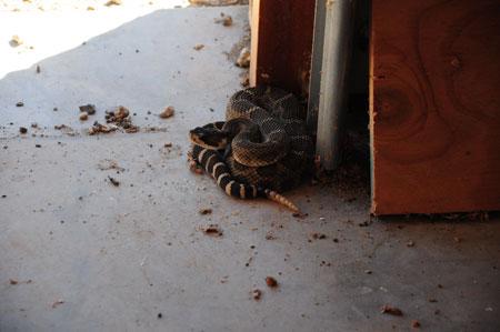 rattler in the garage