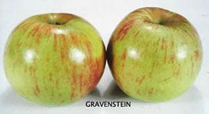 In Praise of the Gravenstein Apple
