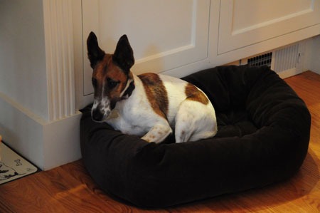 hopeful Oscar in his bed