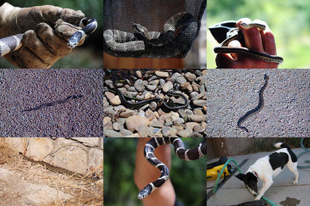 snake montage