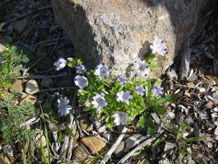 Five Spot in Sonoma