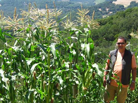 corn in Sonoma