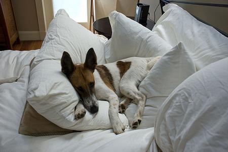 Oscar on sheets