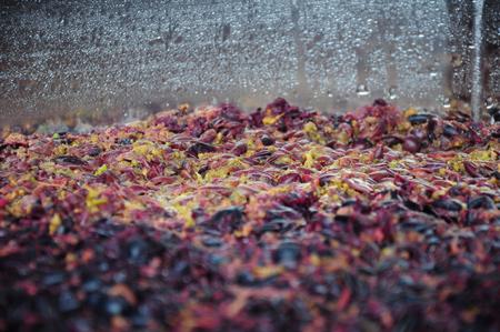 fermenting cab