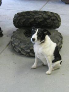 Terrier Garage