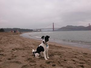 Toward a Terrier New Year