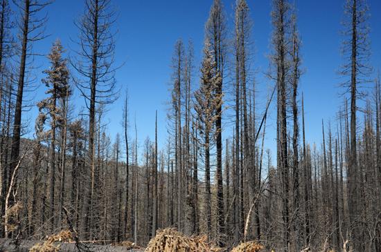 burned forest in Lassen Volcanic National Park