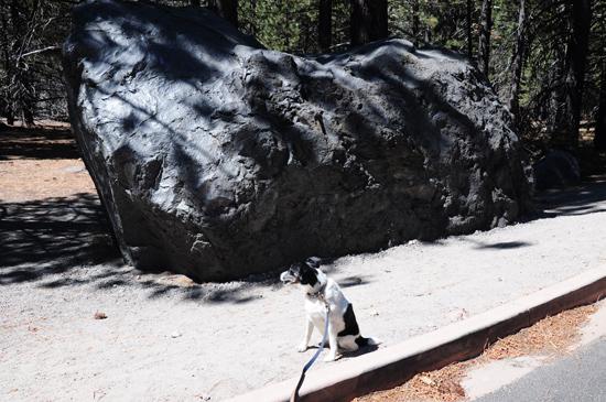 hot rock and terrier, Lassen Volcanic National Park