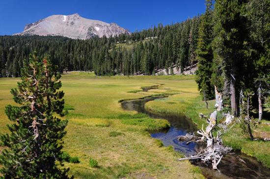 meadow in lassen volcanic park