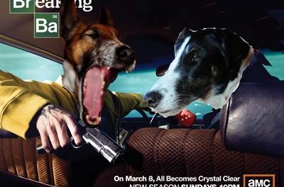 Breaking Bad Terriers