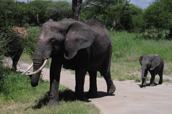 Mama and Baby elephant.