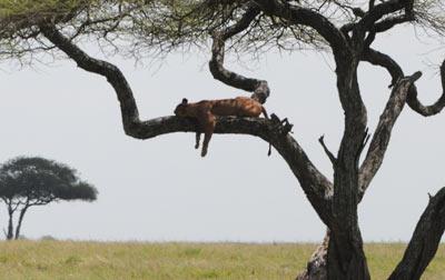 Serengeti Serendipity