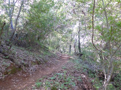 Deer path, Almaden Quicksilver park