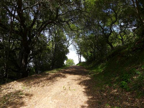 shady road trail, Almaden Quicksilver Park