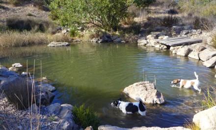 Pond Life. . .Naturally?