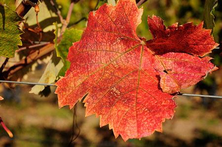 The 2013 Sonoma Harvest Report