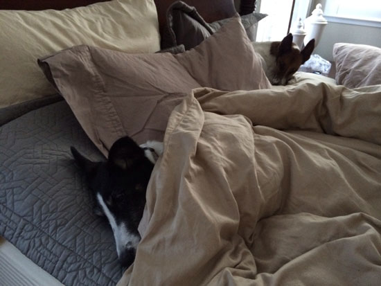 The AM Terrier Routine