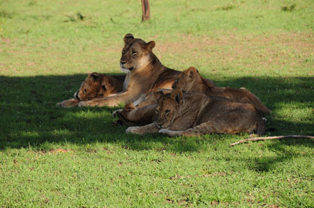 lionmom