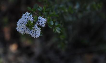 Sonoma Wildflower Report