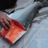 Salmon Daze