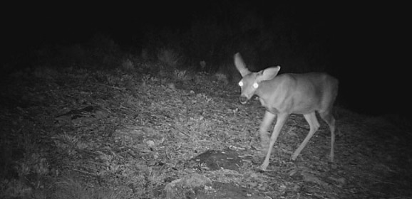 Critter Surveillance Cam
