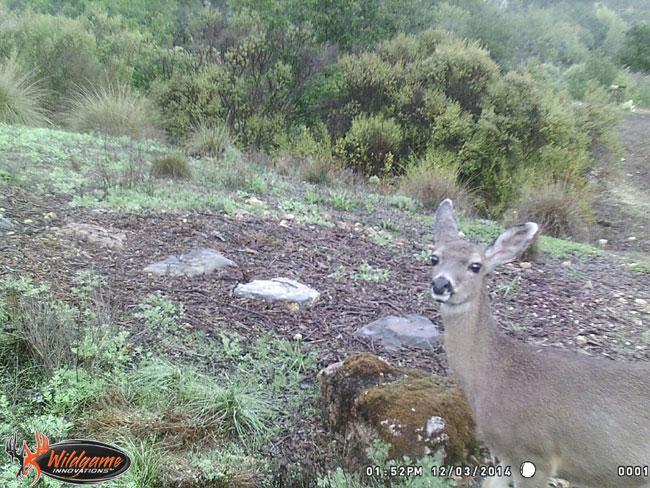 Deer Selfie!