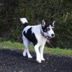 Vale Good Terrier